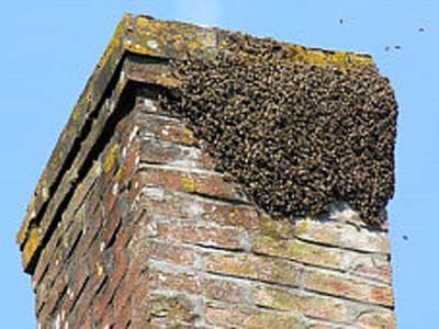 How to remove bees in your chimney solutioingenieria Image collections